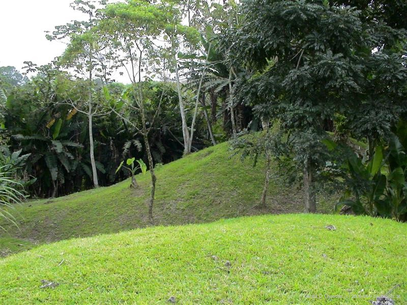 Archeological mounds at Los Naranjos